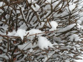 Snow Branches by DJCandiDout