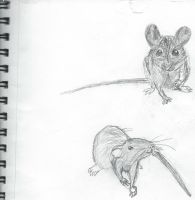 Mouse study by vulpix15