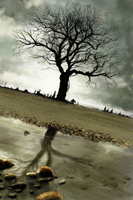 Speed painting :Forgotten tree by Beus-B