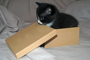 kitty and box 3 by LucieG-Stock