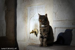 Guard of the Fountain by ganara