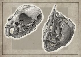 Skull Studies: 1 by Clotaire