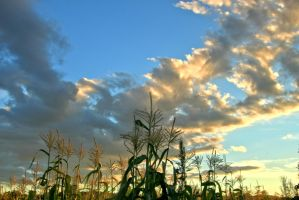 Corn and Clouds 1 by Polyrender