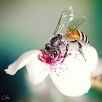 Honey Dip by Eibography