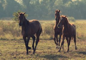 Horses game by Lilia73
