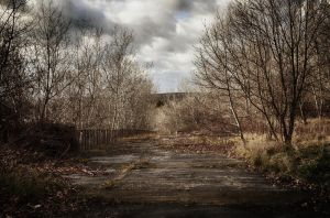 Interlude I, the forest by Hitchhikerdave