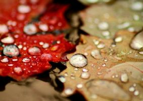 When autumn rain falls..2 by forrest-walker