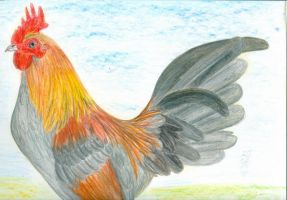 Rooster by Minga