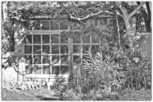 Old greenhouse. by jennystokes