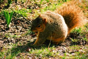 Squirrel in the Grass by VividThorn