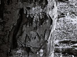 Scarred Bark 2 by JeremyC-Photography