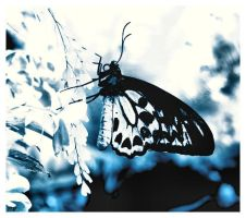 Butterfly, butterfly.. by psychorchestra