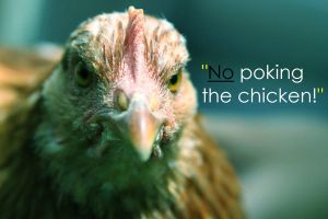 Quote I made up by chook-four