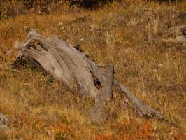 dead log mountains by fotophi