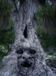 old man tree by LuchareStock