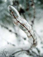 Ice trap by akrPhotography