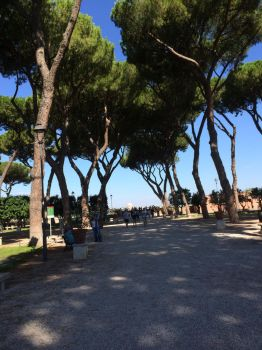 Rome - Trees by LiruRules