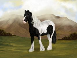 Gypsy Horse by TheCookieAnnie