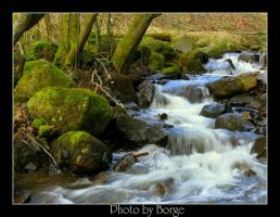 Spring in Forrest.. by kaborge