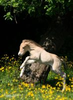 Enjoying the meadow by MorganeS-Photographe