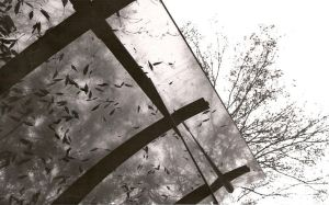 U, O and T: Bus shelter trees by pan-feylin