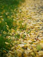 Yellow and green. by asaluiphotography
