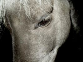 Horse close up by jai-ho24