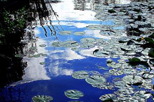 Lily Pads by MysteryWoman101