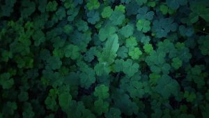 Three-leafed clovers by RicheliVargas