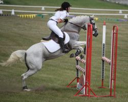 STOCK Showjumping 451 by aussiegal7