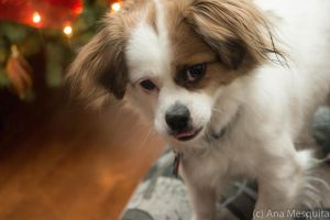 Tongue Out - Again? by AnaMesquitaPhotos