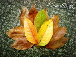 Contrast by PMinelly
