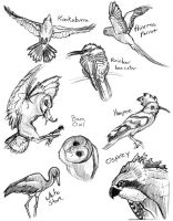 Animal Studies - Birds by Gingco