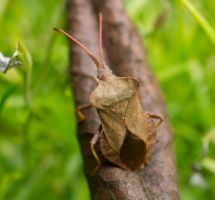 Day 165: It's a bugs life by Kaz-D