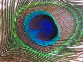 Peacock Feathers 10 by ArcadianSpaceship