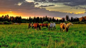 Horse Herd by Shyann363