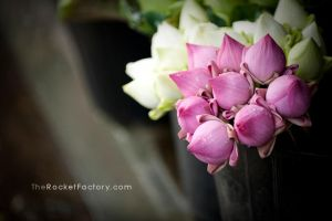 Flowers 3 by frankrizzo