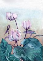 Cyclamen by kosharik69