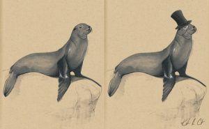 Savvy Sea Lion by MyRobotBee