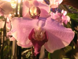 Orchids and sunshine by luckynr1