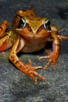 Frog by DiveAddict