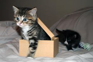 kitty and box 1 by LucieG-Stock