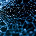 web of life ... by lomatic