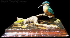 Taxidermy - Kingfisher by Illahie