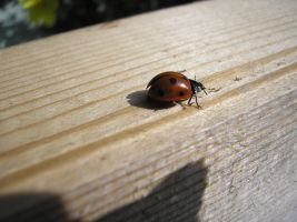 Ladybird2 by Tasastock