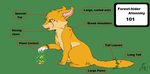 Forest Hider Cat Atonomy Guide 101 by AriaSnow