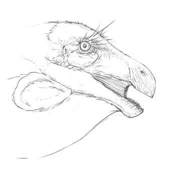 From My Sketch Blog - Therizinosaurus Head Study by nemo-ramjet