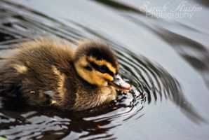 Adorable duckling by CapnSarah