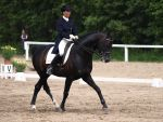 Dark bay dressage gelding by wakedeadman