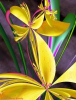 Canna Lily by pannyhb